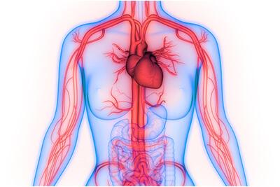 Srce i cirkulacija